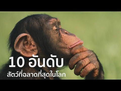 10 อันดับสัตว์ที่ฉลาดที่สุดในโลก