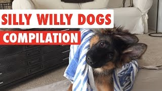 Silly Willy Dogs Video Compilation 2016