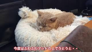 ホームセンター猫が家に来て3ヶ月、そう言えばうちに初めて来た時(12/13Fri)も13日の金曜日、そしてこの動画をアップするのも今日(3/13Fri...