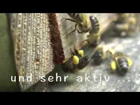 Varroa-Behandlung - Nein Danke - imkern ohne Chemie