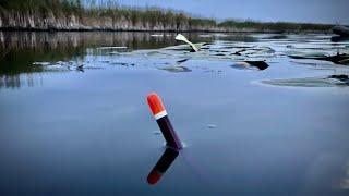 Ловля КАРАСЯ на реке Сула на ПОПЛАВОК