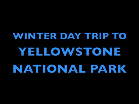 Winter Trip Yellowstone National Park |  Bison - Snow - Hot Springs!