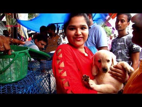 The Famous Indian Pet Market Galiff Street Kolkata Ii Jubon Dave Youtube