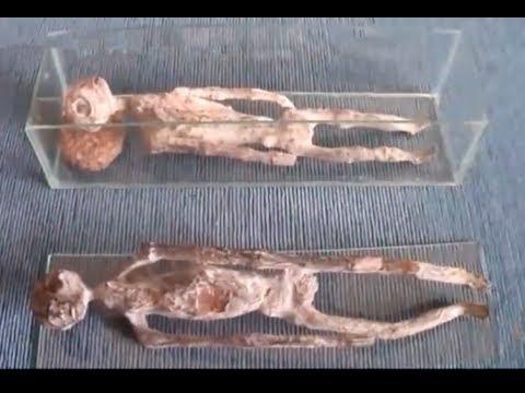Reptiloide Wesen Und Sonstige Geschöpfe
