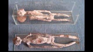 Reptiloide Wesen Bei Ausgrabungen Gefunden!
