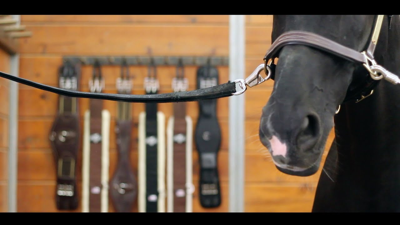Eventing - A Story of Horse & Rider #1
