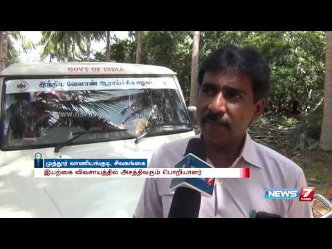 Engineer turned farmer's success in organic farming at Sivaganga | News7 Tamil