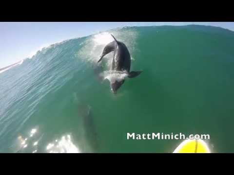 Dolphin Body-Slams Surfer, Proves They're Just As Clumsy As We Are