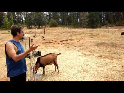 WWOOFing California - Episódio 2 - Ricardozito Cabra Macho!
