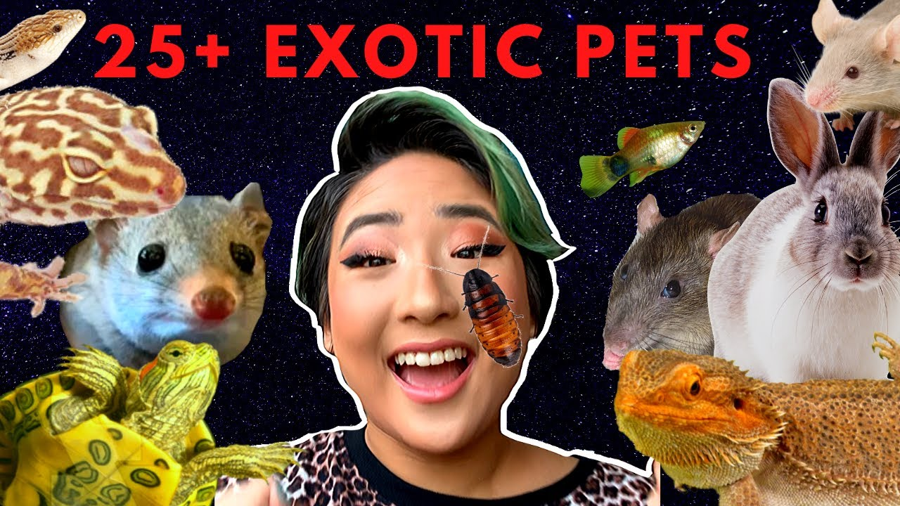 MEET ALL MY EXOTIC PETS AND ANIMALS 2019! // 25+ Amazing Creatures (I have an exotic zoo!)