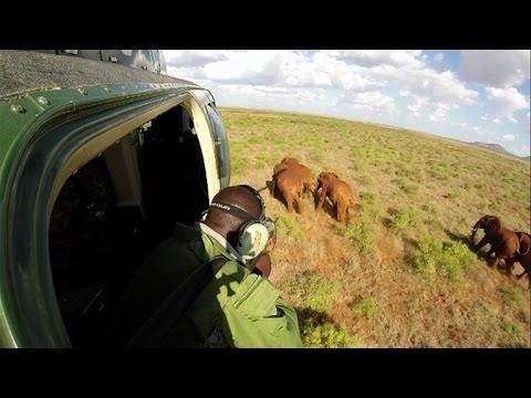 Tracking elephants as new railway cuts Kenya