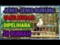 Jenis Burung Yang Mudah Dipelihara Di Rumah  Mp3 - Mp4 Download
