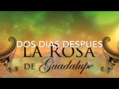 La rosa de Guadalupe college style