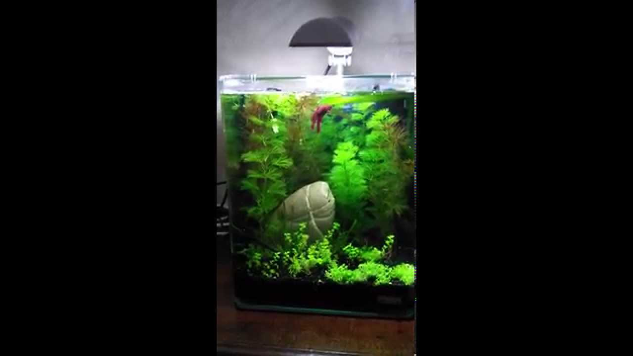 nano cube dennerle 20l after 10 days youtube