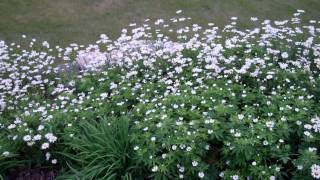 Video One Daisy Plant Gone Wild! download MP3, 3GP, MP4, WEBM, AVI, FLV Agustus 2018