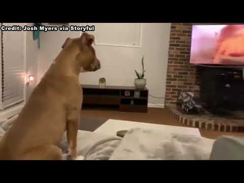 Monsters: Jim Colbert Blog - Awww: Dog Gets Emotional Watching The Lion King!