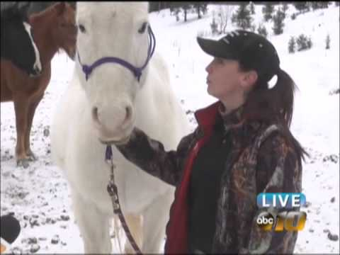 Champion Woman Seeks Nonprofit Status For Horse Rescue Operation
