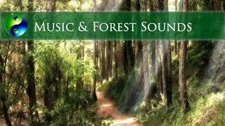 Relaxing Music with forest sounds: Meditation Music; New Age Music; Yoga Music; Spa Music; Relax