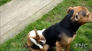 Rare&Funny! Animal sex videos part2