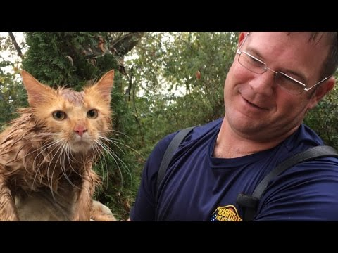 Firefighters Rescue Cat Named Thomas Jefferson From Drainpipe On Election Day
