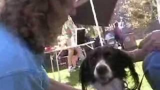 Terri Steuben At Springer Spaniel Rescue Event
