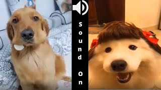 Cute Pets And Funny Animals Compilation 8 -  awesome cute animal videos / Fantastic Animals