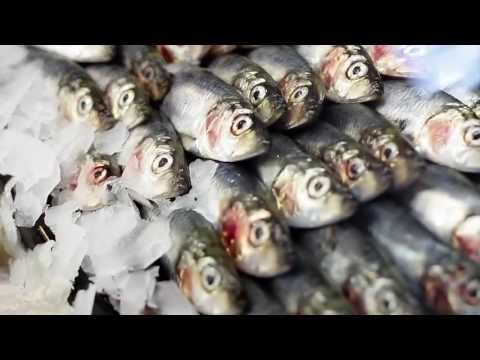 Strib Fisk | Middelfart