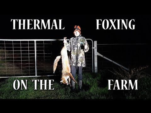 THERMAL FOXING ON THE FARM
