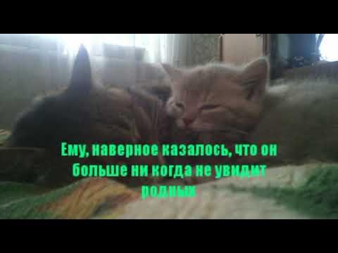Вопрос: Как подружить чужого котёнка со взрослой кошкой?