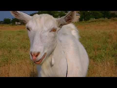Бизнес план по разведению коз 410 000 чистой прибыли в месяц