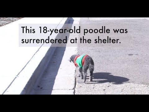 """18-Year-Old Dog Dumped At Shelter Because Family Said He Was Too """"Stupid"""""""