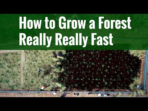 How To Grow A Forest Really Really Fast | Miyawaki Afforestation Project Of Kerala Tourism