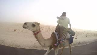Afryka Rowerem-Mauretania-Pustynia- Stado wielbłądów
