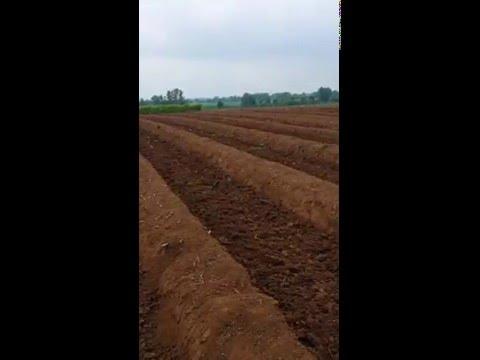 kuskonmaz üretim kök tohum faliyetleri  (Zekeriyaköy)