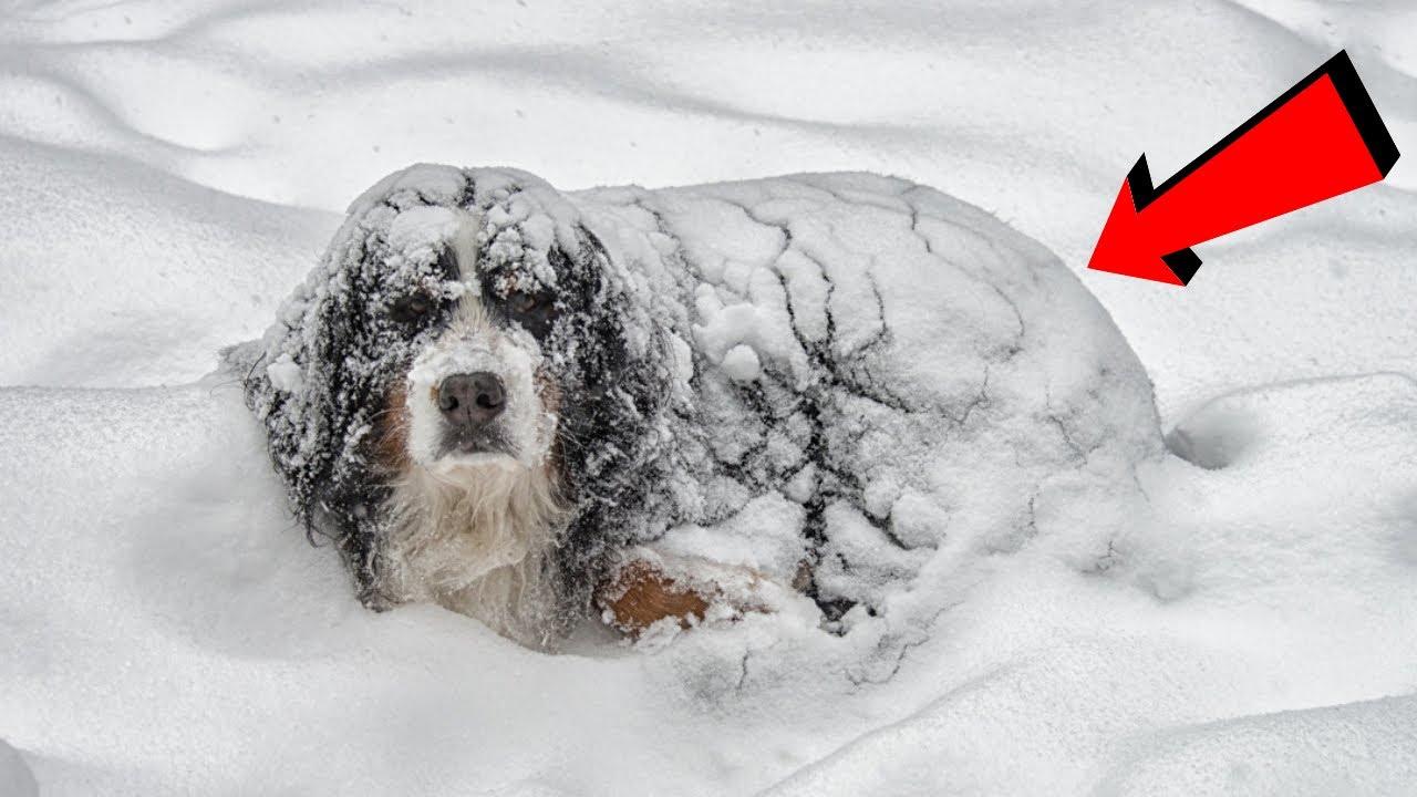 Donmak Üzere Bir Köpek Buldular, Karnının Altında Öyle Bir Şey Gizliyordu ki