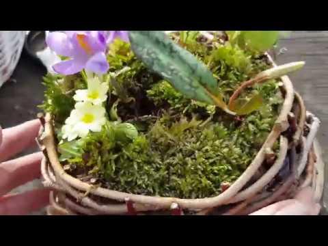 Kako napraviti korpu od pruća i ad hoc aranžman od vesnika proleća