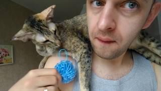 День из жизни ориентальной кошки КоКо