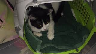 MY CAT GIVE BIRTH FOR THE FIRST TIME