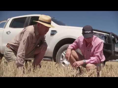 Sakura® Herbicide for Wheat Crops - 2:16