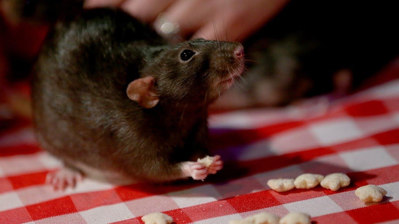 San Francisco Dungeon Rat Cafe