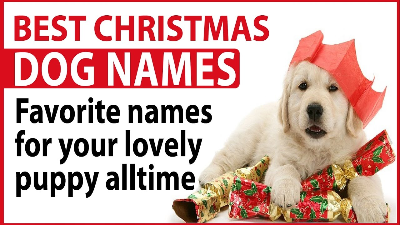 best christmas dog names favorite names for your lovely puppy alltime youtube - Christmas Pet Names