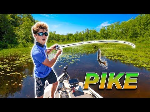 EPIC Backwater Fishing For NORTHERN PIKE! (Vicious Strikes)