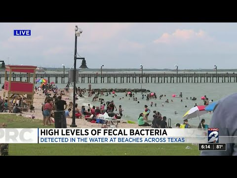 Disgusting!! High Levels of Fecal Bacteria In Beaches Across Texas