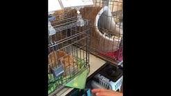 家 アニマル サポート 高知 保護犬、保護猫の為に継続的なご寄付をお願いします|特定非営利活動法人アニマルサポート高知家