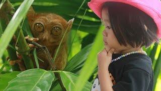 tarsier snake monkey and more in bohol adventure donna the explorer