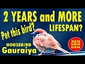 Eurasian Tree Sparrow  Years Or More  Mp3 - Mp4 Download