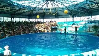 Дельфинарий Сочи Парк. Июль 2016. Выступление дельфинов.(Выступление дельфинов Сони и Крохи. Сочи Парк., 2016-07-24T11:25:08.000Z)