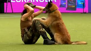 15 Best Trained & Disciplined Dogs in The World
