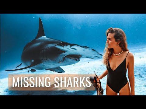 Missing Sharks Documental − Investigación sobre la caza de tiburones en Panamá