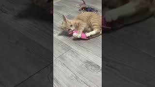 캣잎인형에 취한 고양이